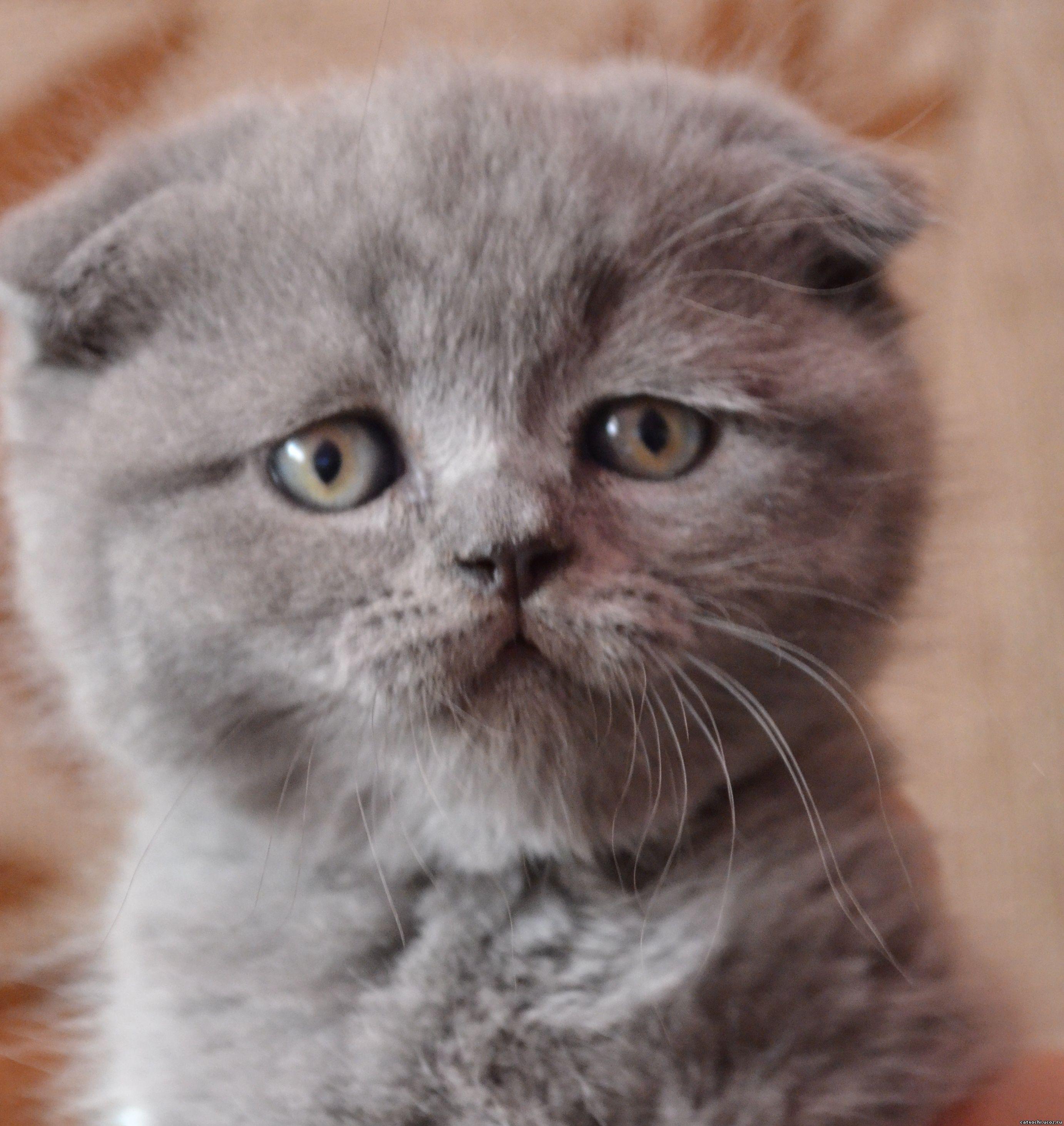 Аллергия у кошки на ушах зимой в какой